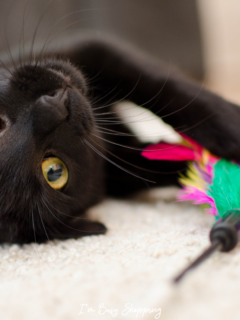 Although National Cat Day is still months away, looking for cat toys for cats as early as now is very understandable. Our sweet furry friends are just too irresistible — we can't do anything but spoil them with love and new exciting toys every time we get the chance.